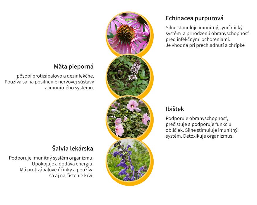 Bylinky na podporu imunitného systému